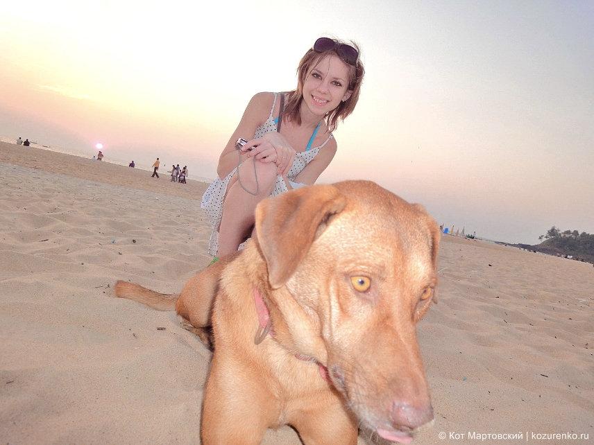 Собаки в Индии, ГОА