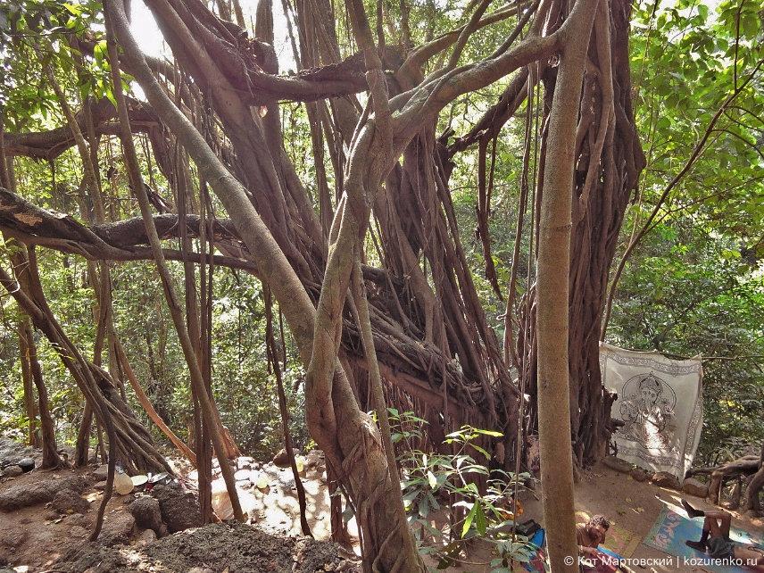 Арамболь. Дерево Баньян