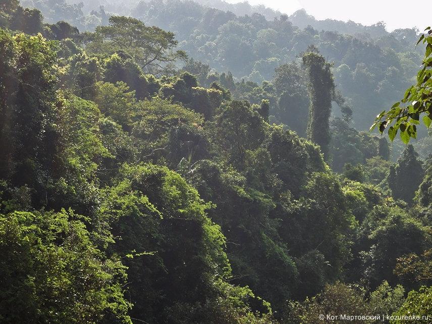 Джунгли у водопада Дудхсагар