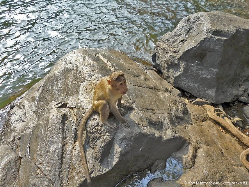 Обезьяны у водопада Дудхсагар