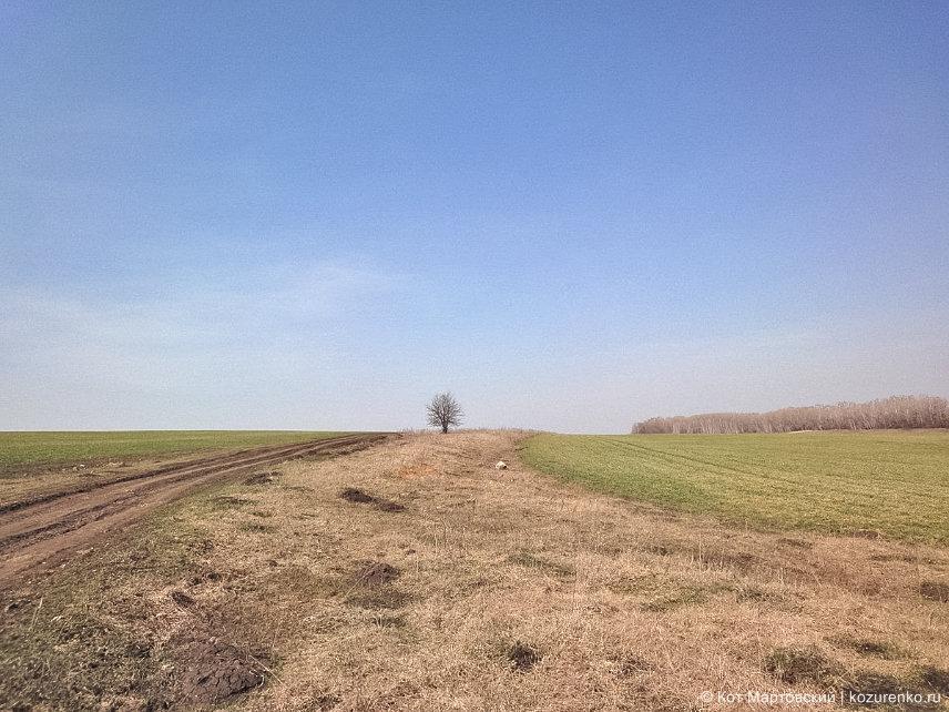 В полях