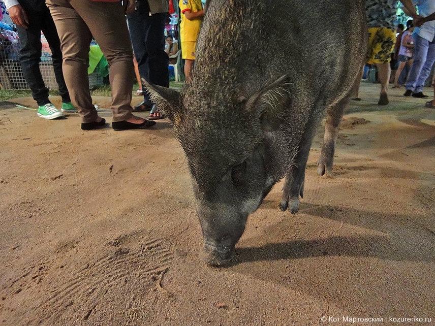 Свинья спокойно гуляет по рынку