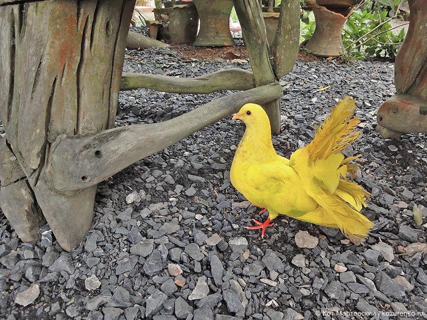 Крашеный голубь