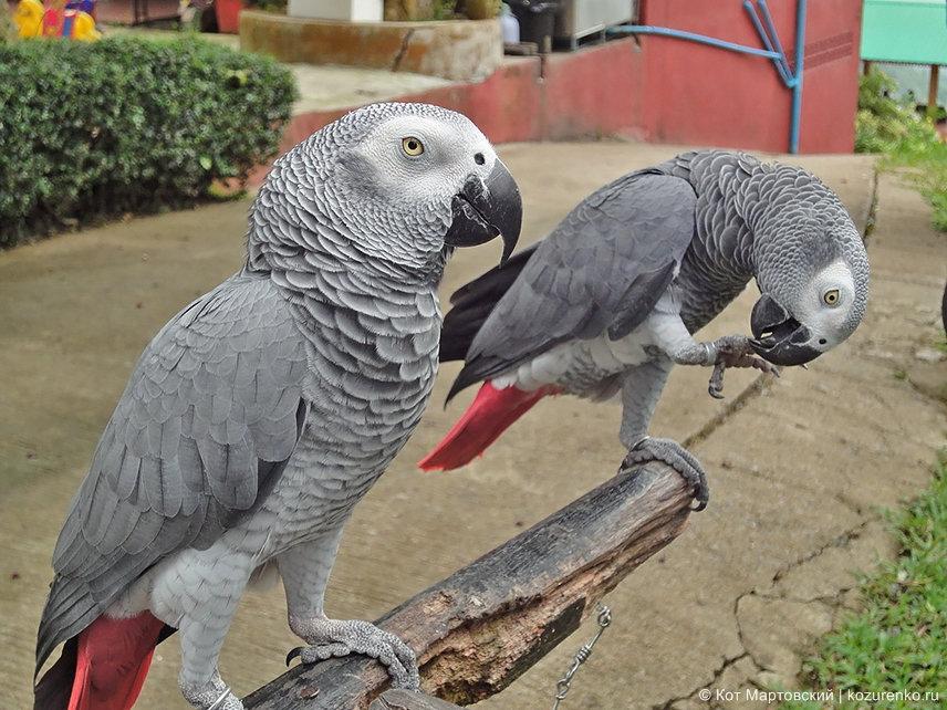 Попугаи на Самуи