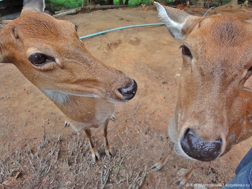 Хотите потрогать оленя за нос? :)