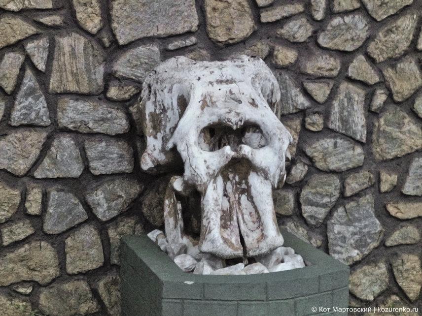 На въезде в Ялу установлен настоящий череп слона