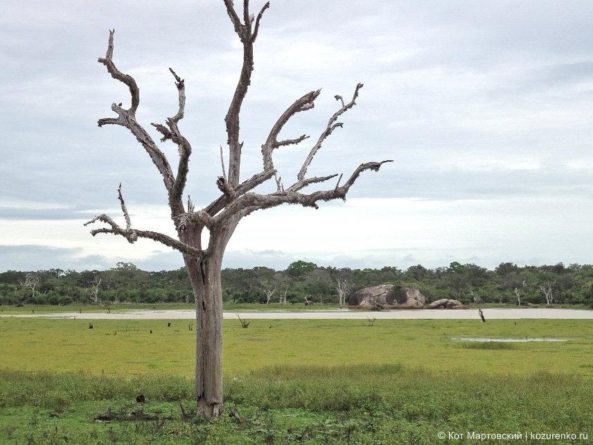 Высохшее дерево