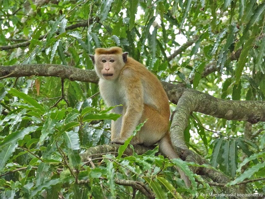Прическа monkey-style