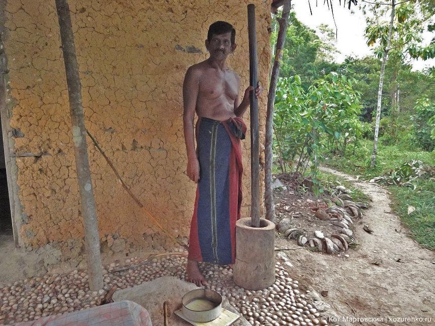 Шри-Ланка: сборщик корицы