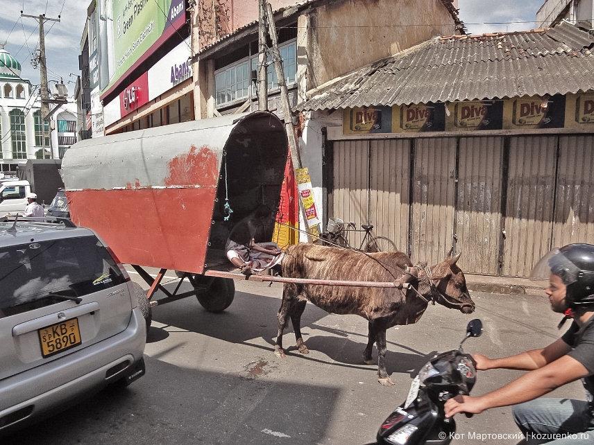 Улицы Галле, Шри-Ланка