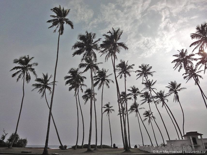 Пальмы на пляже Коггала