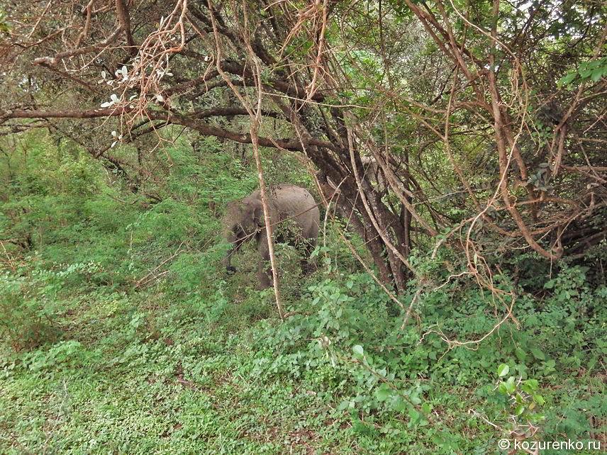 Слоненок в лесу