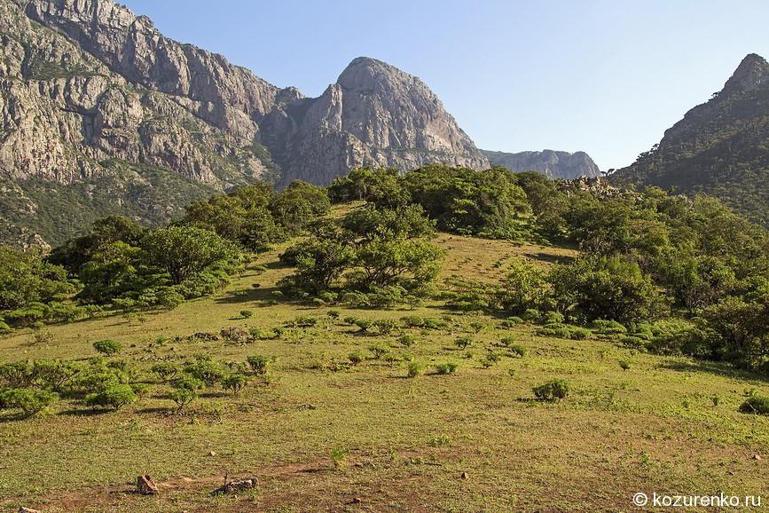 Зеленый луг в горах Сокотры