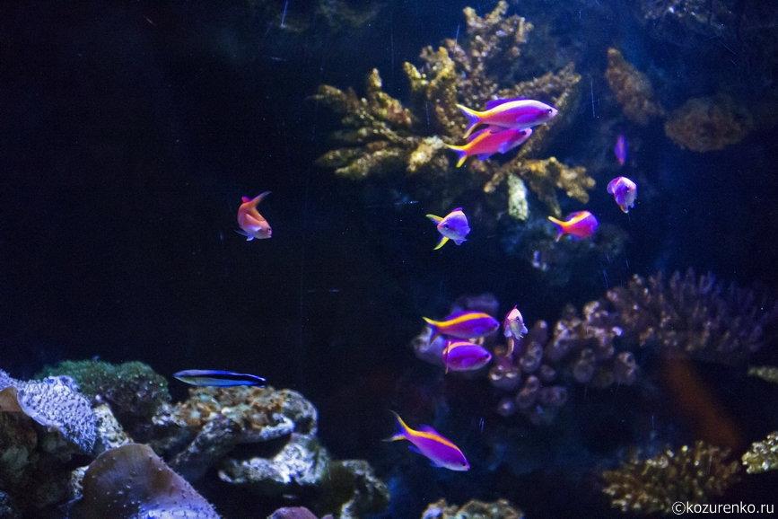 Маленькие фиолетовые рыбки