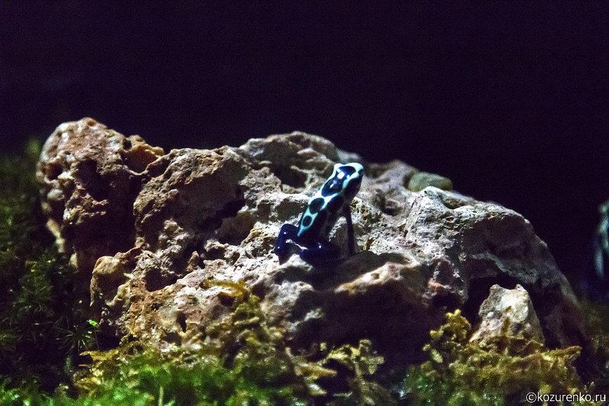 Сине-бирюзовая маленькая лягушка