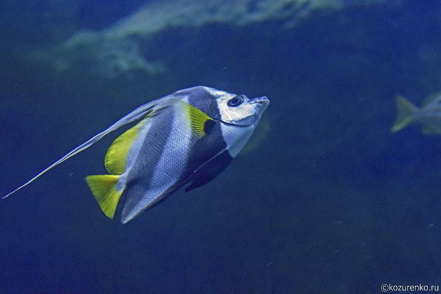 Полосатая морская рыба