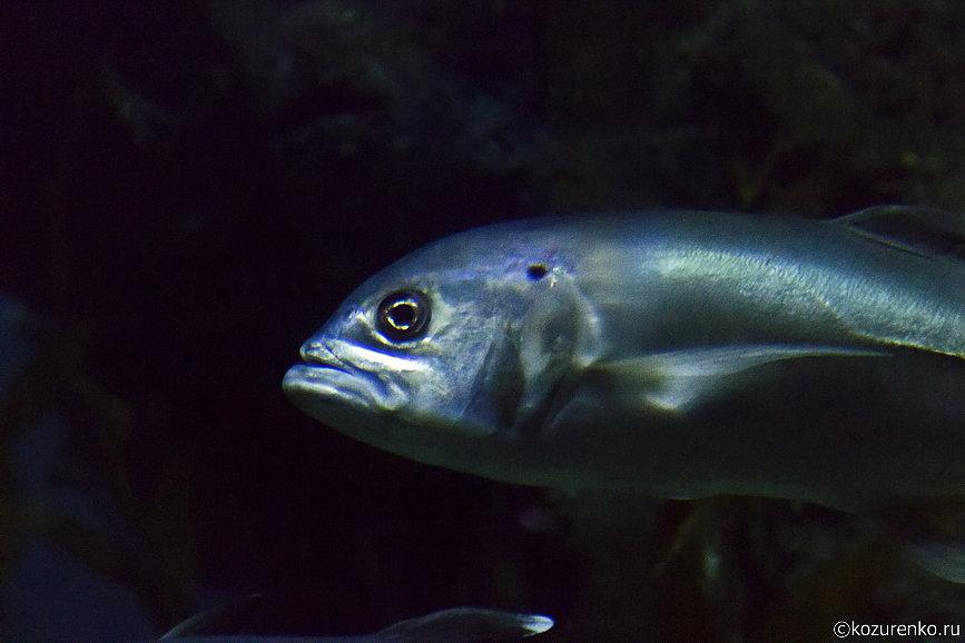 Мрачная блестящая рыба