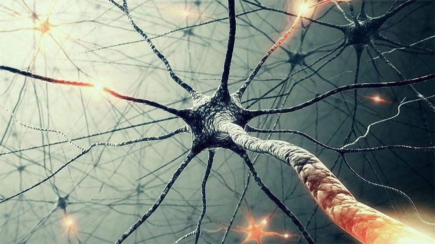 Модель биологической нейронной сети