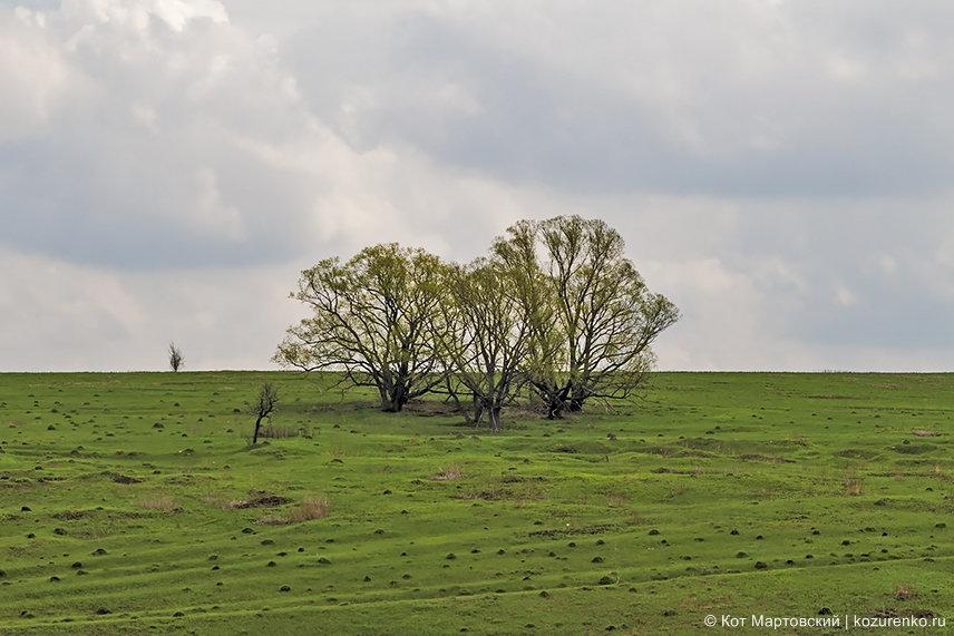 Одинокие деревья на той стороне оврага и маленькой речки на его дне
