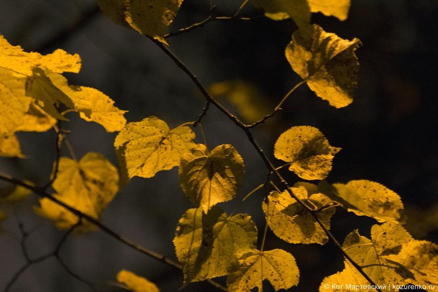 Желтые осенние листья
