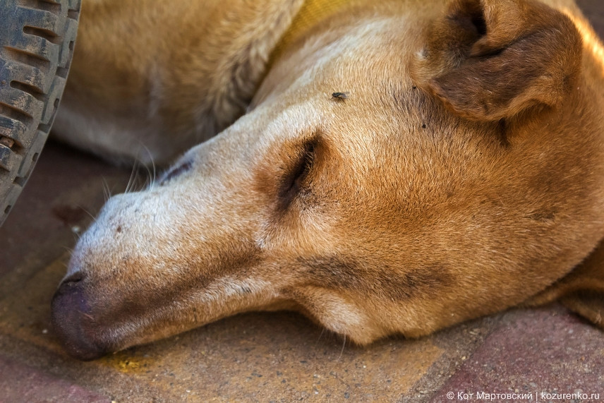 Муха пожирает собаку