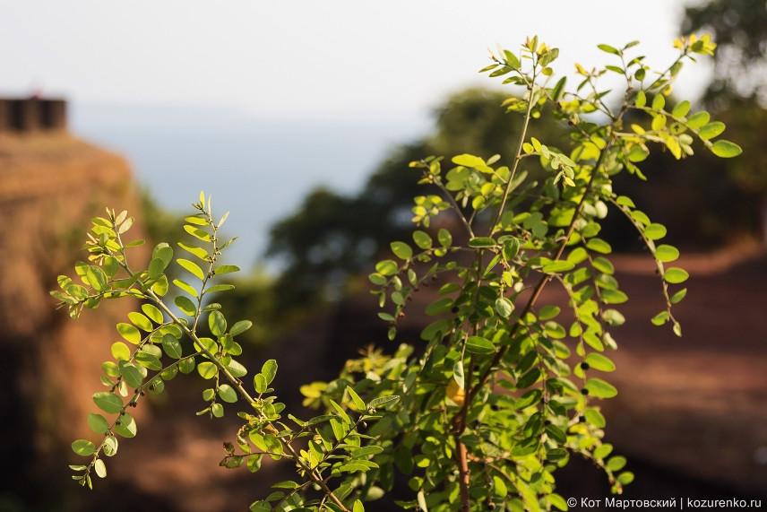 Сквозь стены пробиваются новые растения
