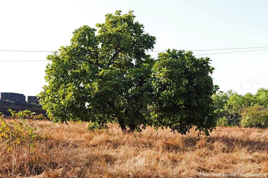 Пышное дерево у входа